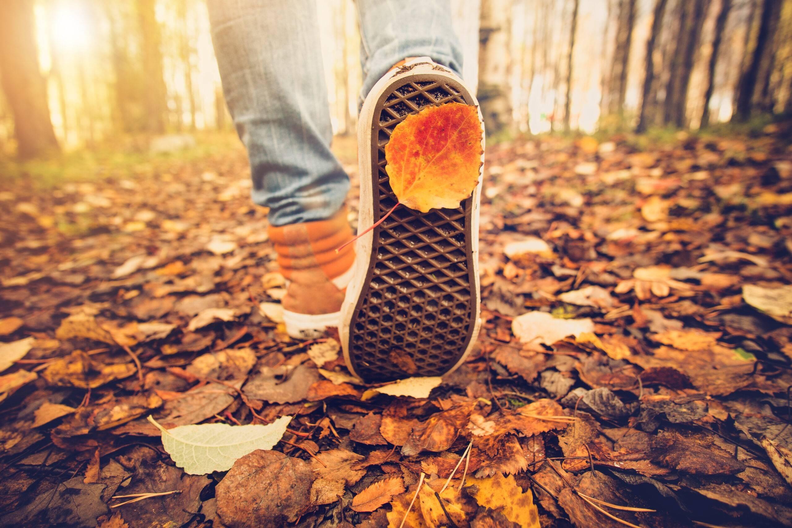 Someone walking through Autumn leaves